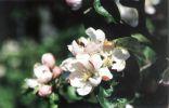 Makro včely. Ale nie vždy je boh fotografovania (Photolitos) priaznivo naklonený.