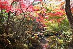 japan2012_brano_img_4673.jpg: 271k (2012-11-04 17:43)