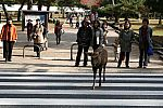 japan2012_brano_img_4755.jpg: 184k (2012-11-04 17:43)