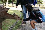 japan2012_brano_img_4765.jpg: 120k (2012-11-04 17:43)