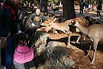 japan2012_brano_img_4770.jpg: 158k (2012-11-04 17:43)