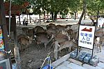 japan2012_brano_img_4776.jpg: 187k (2012-11-04 17:43)