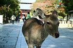 japan2012_brano_img_4778.jpg: 93k (2012-11-04 17:43)