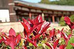 japan2012_brano_img_4802.jpg: 102k (2012-11-04 17:43)