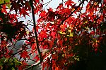 japan2012_brano_img_4819.jpg: 160k (2012-11-04 17:43)