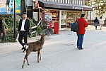 japan2012_brano_img_4877.jpg: 164k (2012-11-04 17:43)