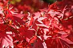 japan2012_brano_img_4992.jpg: 92k (2012-11-04 17:43)