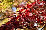 japan2012_brano_img_5014.jpg: 117k (2012-11-04 17:43)