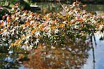 japan2012_brano_img_5069.jpg: 152k (2012-11-04 17:43)