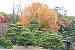 japan2012_brano_img_5092.jpg: 202k (2012-11-04 17:43)