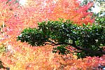 japan2012_brano_img_5110.jpg: 155k (2012-11-04 17:43)