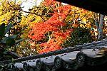 japan2012_brano_img_5114.jpg: 171k (2012-11-04 17:43)
