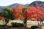 japan2012_brano_img_5151.jpg: 226k (2012-11-04 17:43)
