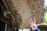 japan2012_brano_img_5189.jpg: 173k (2012-11-04 17:43)