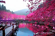 _japan_sakura_Lighted-Cherry-Blossom-Lake-Sakura-Japan.jpg: 170k (2013-01-07 10:54)