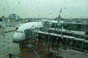 japan2012_slavo_20121103_p101063404.jpg: 117k (2012-11-03 13:53)