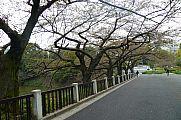 japan2012_slavo_20121105_p101066936.jpg: 243k (2012-11-05 13:24)