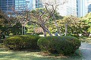 japan2012_slavo_20121107_p1010809140.jpg: 278k (2012-11-07 14:34)