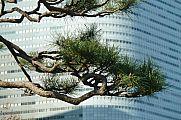 japan2012_slavo_20121107_p1010816147.jpg: 202k (2012-11-07 14:42)