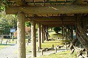 japan2012_slavo_20121107_p1010827158.jpg: 226k (2012-11-07 14:52)