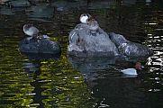 japan2012_slavo_20121107_p1010835166.jpg: 147k (2012-11-07 14:59)