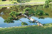 japan2012_slavo_20121107_p1010847178.jpg: 213k (2012-11-07 15:16)