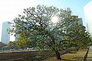 japan2012_slavo_20121107_p1010852183.jpg: 236k (2012-11-07 15:38)