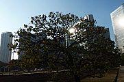 japan2012_slavo_20121107_p1010854185.jpg: 178k (2012-11-07 15:39)
