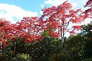 japan2012_slavo_20121108_p1010917244.jpg: 273k (2012-11-08 14:15)