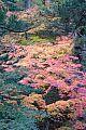 japan2012_slavo_20121108_p1010970293.jpg: 261k (2012-11-08 15:52)