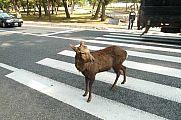 japan2012_slavo_20121112_p1020056360.jpg: 210k (2012-11-12 13:02)
