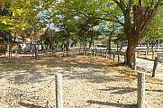 japan2012_slavo_20121112_p1020072375.jpg: 290k (2012-11-12 13:52)