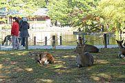 japan2012_slavo_20121112_p1020077380.jpg: 225k (2012-11-12 13:56)