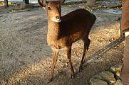 japan2012_slavo_20121113_p1020194479.jpg: 182k (2012-11-13 17:11)