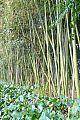 japan2012_slavo_20121114_p1020271551.jpg: 253k (2012-11-14 15:57)