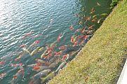 japan2012_slavo_20121114_p1020284563.jpg: 201k (2012-11-14 16:12)