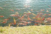 japan2012_slavo_20121114_p1020285564.jpg: 183k (2012-11-14 16:12)