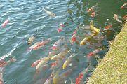 japan2012_slavo_20121114_p1020287566.jpg: 138k (2012-11-14 16:13)