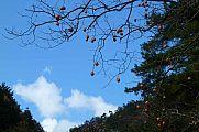 japan2012_slavo_20121116_p1020310584.jpg: 144k (2012-11-16 12:55)
