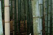 japan2012_slavo_20121116_p1020317591.jpg: 120k (2012-11-16 13:22)