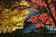 japan2012_slavo_20121116_p1020359628.jpg: 228k (2012-11-16 15:39)