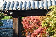 japan2012_slavo_20121116_p1020362631.jpg: 216k (2012-11-16 15:46)