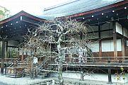 japan2012_slavo_20121116_p1020370639.jpg: 193k (2012-11-16 16:01)
