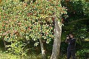 japan2012_slavo_20121118_p1020408676.jpg: 244k (2012-11-18 12:35)