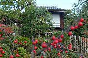 japan2012_slavo_20121118_p1020415683.jpg: 228k (2012-11-18 12:42)