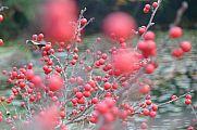 japan2012_slavo_20121118_p1020417685.jpg: 103k (2012-11-18 12:44)