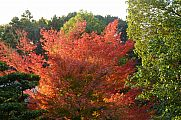 japan2012_slavo_20121118_p1020448711.jpg: 243k (2012-11-18 17:04)