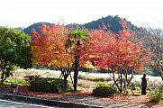japan2012_slavo_20121119_p1020506760.jpg: 261k (2012-11-19 13:34)