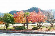 japan2012_slavo_20121119_p1020507761.jpg: 228k (2012-11-19 13:36)
