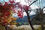 japan2012_slavo_20121119_p1020522776.jpg: 267k (2012-11-19 13:53)